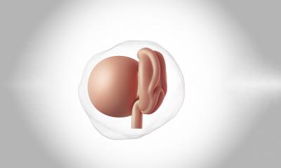 Hamileliğin 4. Haftası